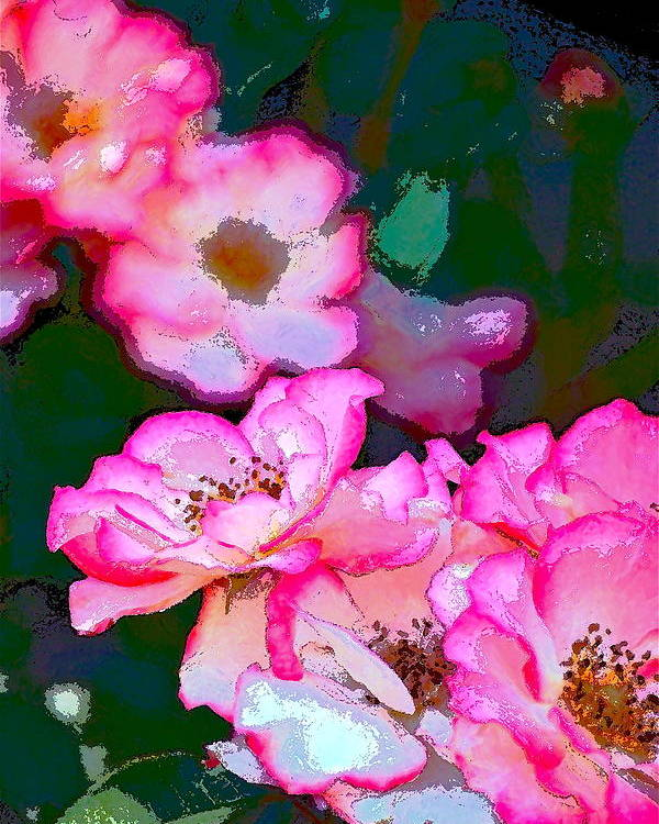 Floral Poster featuring the photograph Rose 130 by Pamela Cooper