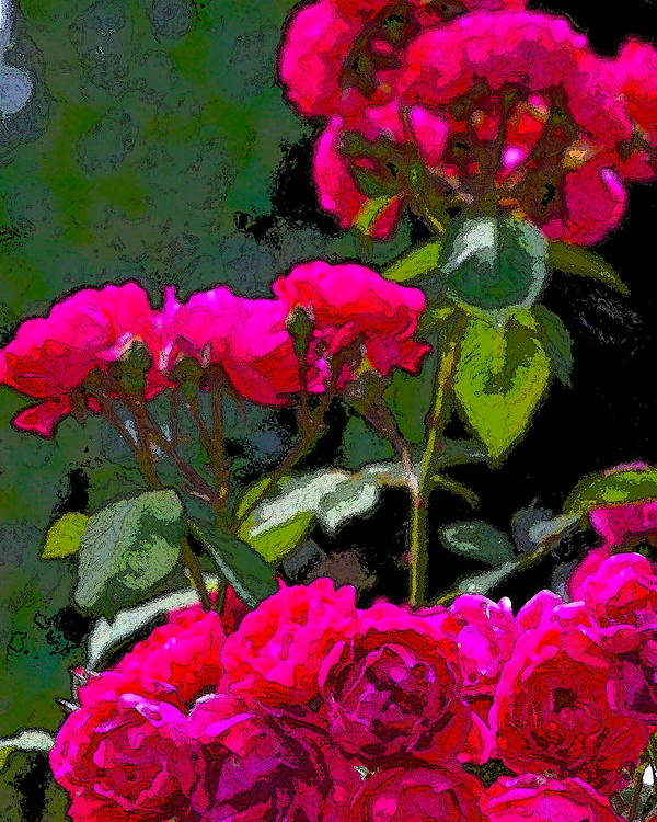 Floral Poster featuring the photograph Rose 135 by Pamela Cooper