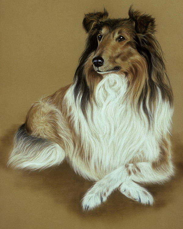 Dog Poster featuring the pastel Rough Collie by Patricia Ivy