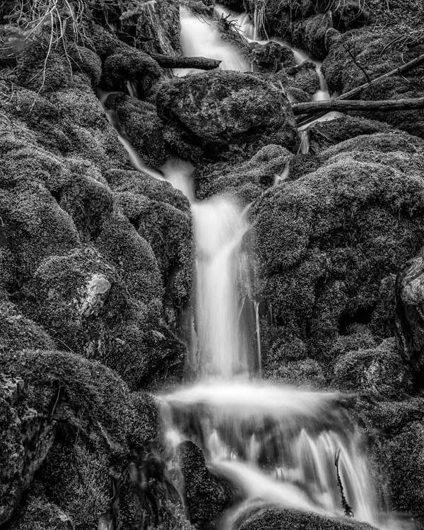 Black N White Poster featuring the photograph Running Through The Mossy Rocks Bw by Mitch Johanson