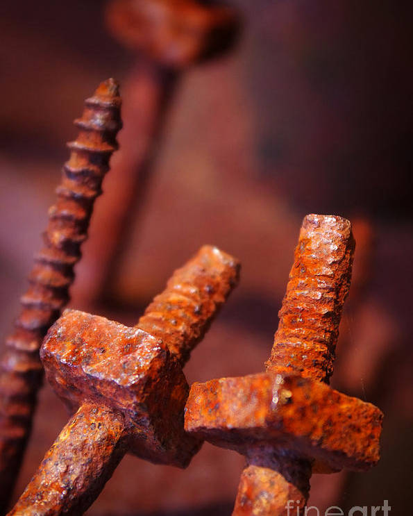 Bolt Poster featuring the photograph Rusty Screws by Carlos Caetano
