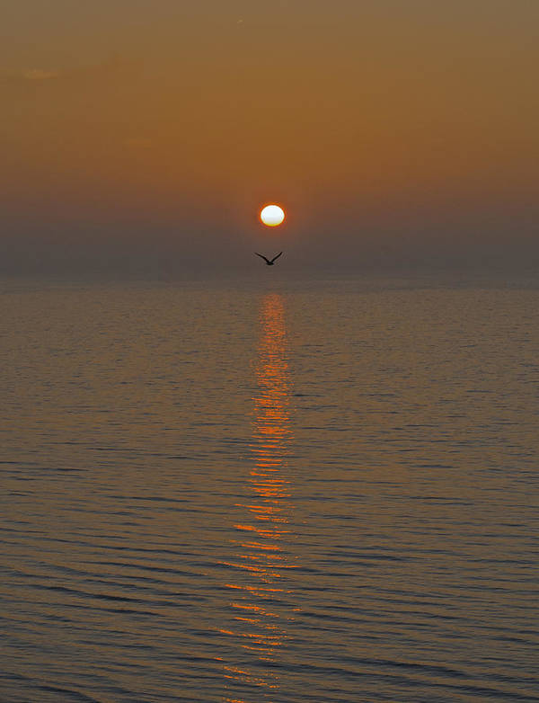 Sunrise Poster featuring the photograph Seagull At First Light by Gary Eason