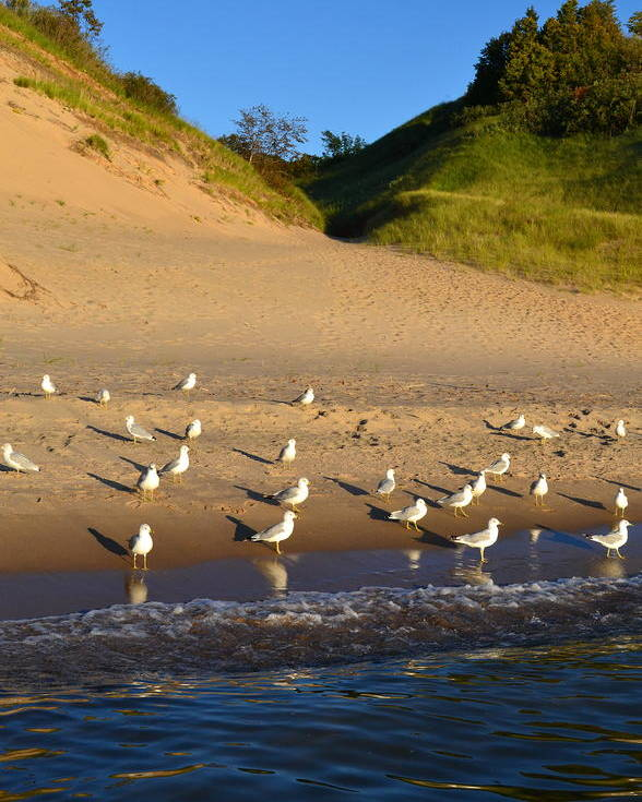 Lake Michigan Poster featuring the photograph Seagulls At The Bowl by Michelle Calkins