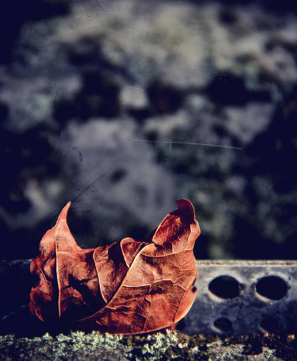Leaf Poster featuring the photograph Season Of Fire by Odd Jeppesen