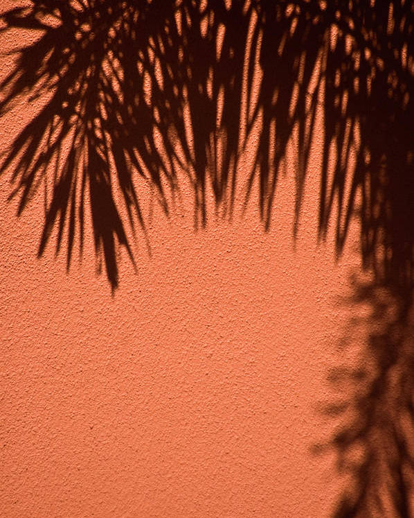 Palm Frond Poster featuring the photograph Shadows Of A Palm by Carolyn Marshall
