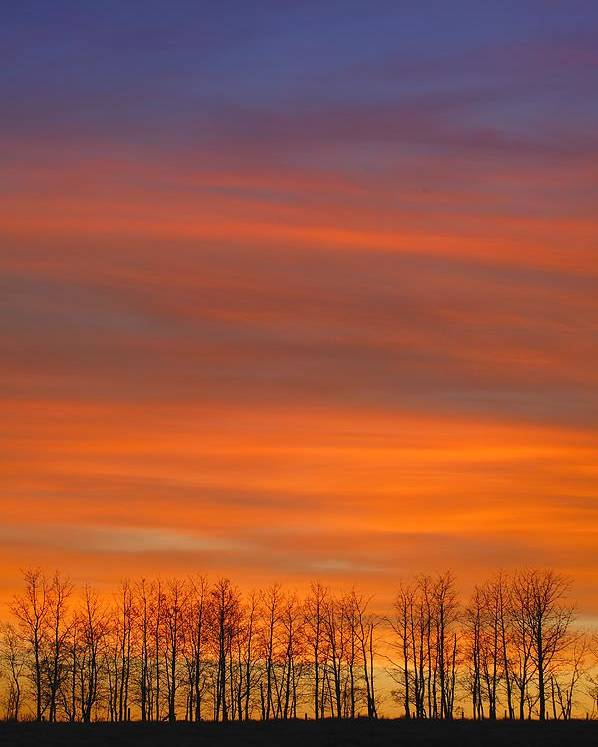 Hope Poster featuring the photograph Silhouette Of Trees Against Sunset by Don Hammond