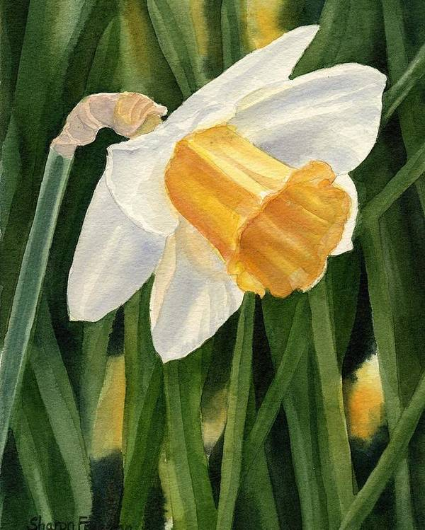 Daffodil Poster featuring the painting Single Yellow Daffodil by Sharon Freeman