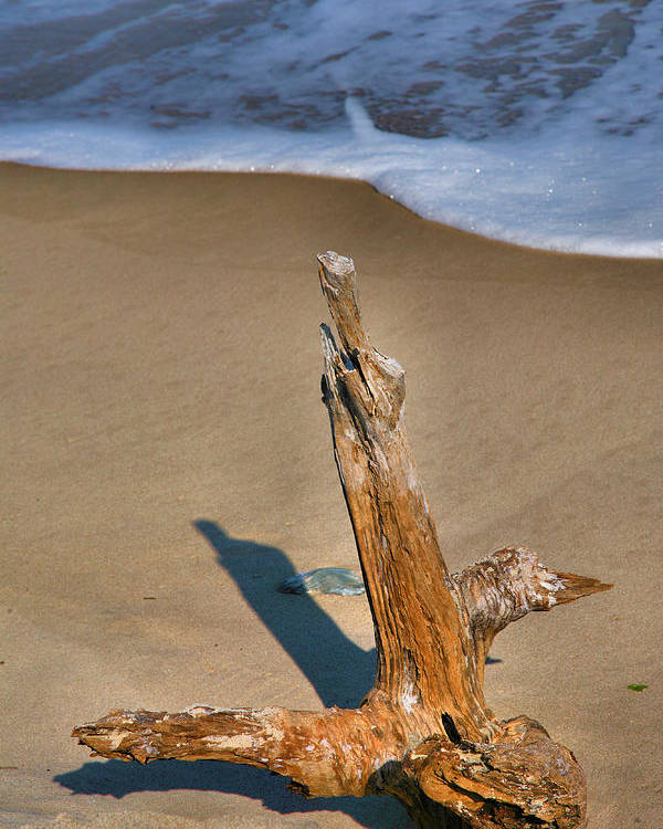 Limb Poster featuring the photograph Snag And Surf II by Steven Ainsworth