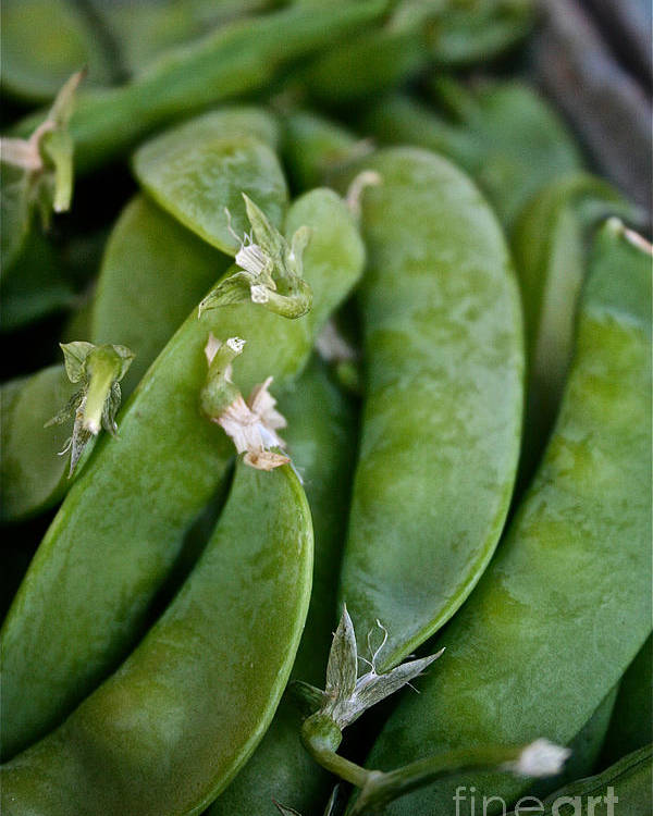 Food Poster featuring the photograph Snap Peas Please by Susan Herber