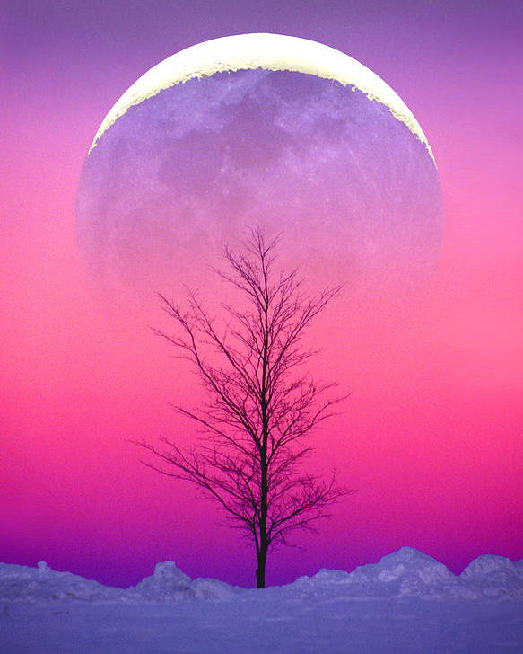 Snow Poster featuring the photograph Snowy Tree by Larry Landolfi