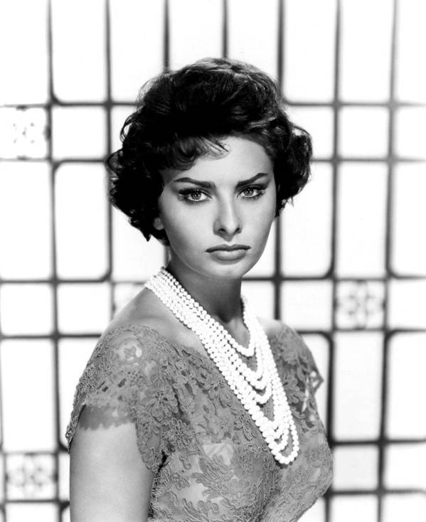 1950s Portraits Poster featuring the photograph Sophia Loren, Circa 1950s by Everett