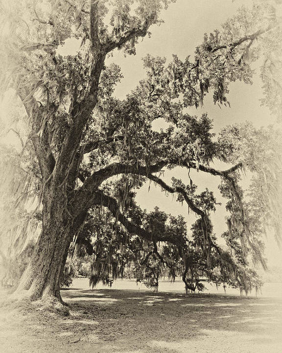 Evergreen Plantation Poster featuring the photograph Southern Comfort Sepia by Steve Harrington