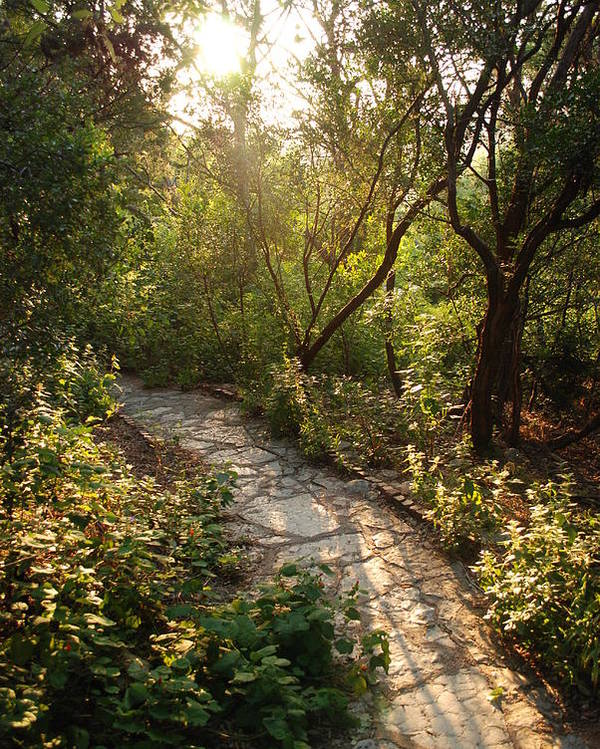 Light Poster featuring the photograph Sparkling Dawn On A Woodland Path by Jennifer Holcombe