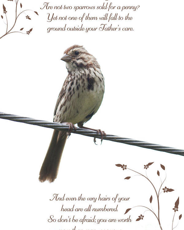 Sparrow Poster featuring the photograph Sparrow by Lena Auxier