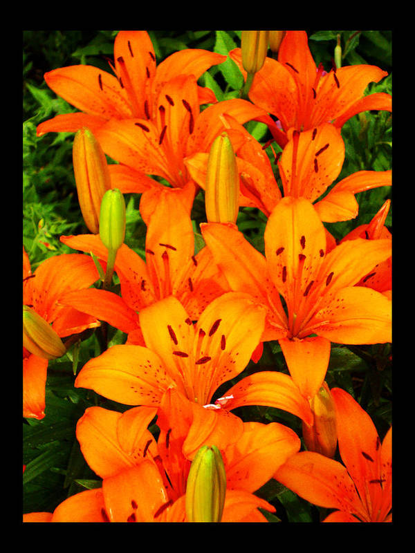 Orange Lilies Poster featuring the photograph Spiritual Bouquets At St. Francis Cathedral by Susanne Still
