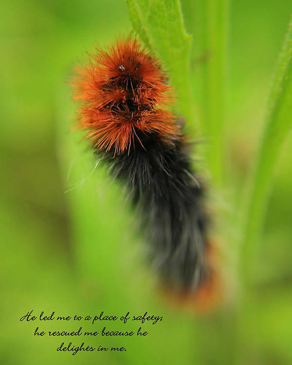 Caterpillar Poster featuring the photograph Spring Caterpillar by Tyra OBryant
