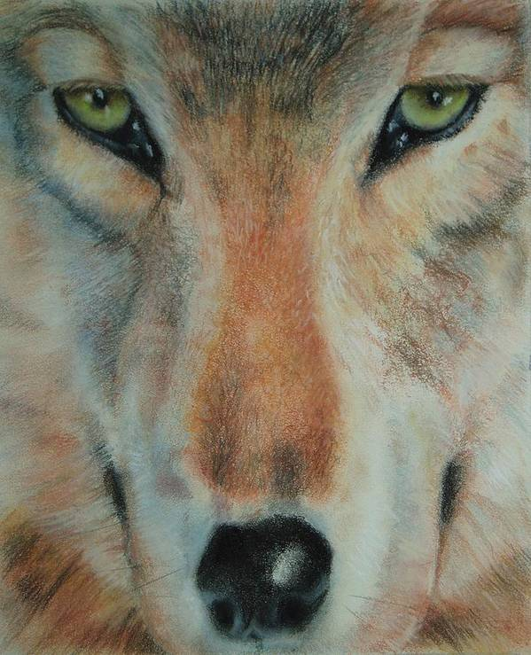 Wolf Poster featuring the pastel Staring Contest by Joanna Gates