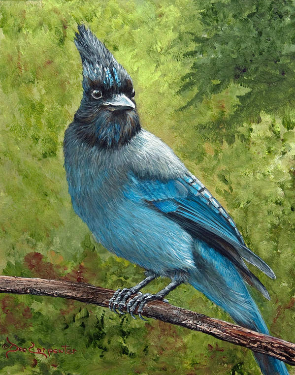 Stellar Jay Poster featuring the painting Stellar Jay by Dee Carpenter