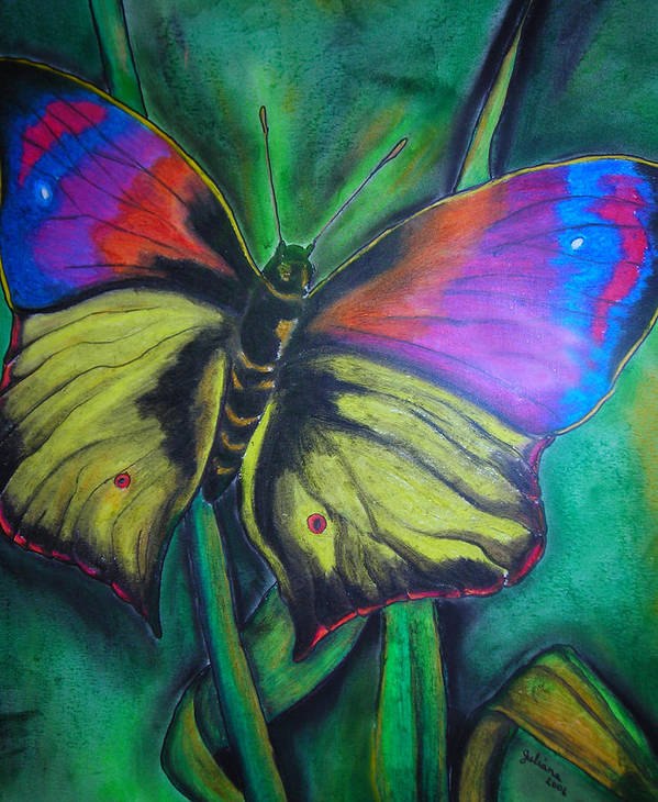 Still Life Poster featuring the drawing Still Butterfly by Juliana Dube