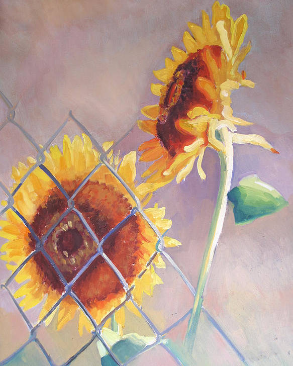 Sunflowers Poster featuring the painting Sunflowers Fenced by Suzanne Cerny