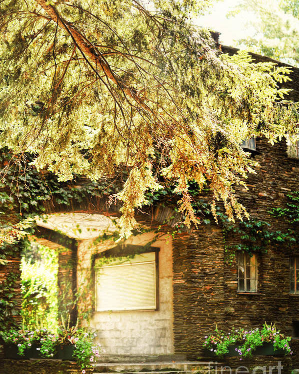 Grapevines Poster featuring the photograph Sunlit Stone Building With Grapevines by HD Connelly