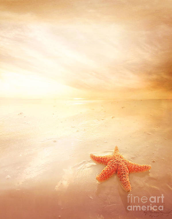 Star Poster featuring the photograph Sunset Star Fish by Lee-Anne Rafferty-Evans