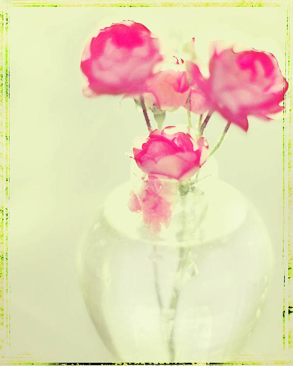 Pink Roses Poster featuring the photograph Sweet Fairy Rose by Linde Townsend