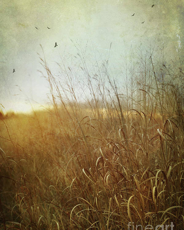 Autumn Poster featuring the photograph Tall Grass Growing In Late Autumn by Sandra Cunningham