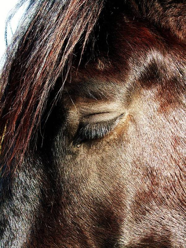 Beautiful Horse With A Tear-drop Poster featuring the photograph Tear-drop by Todd Sherlock