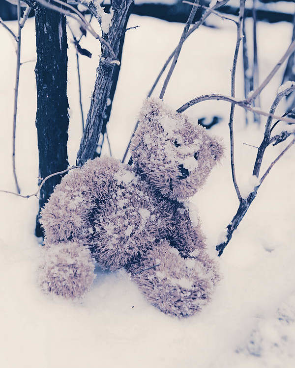 Teddy Poster featuring the photograph Teddy In Snow by Joana Kruse