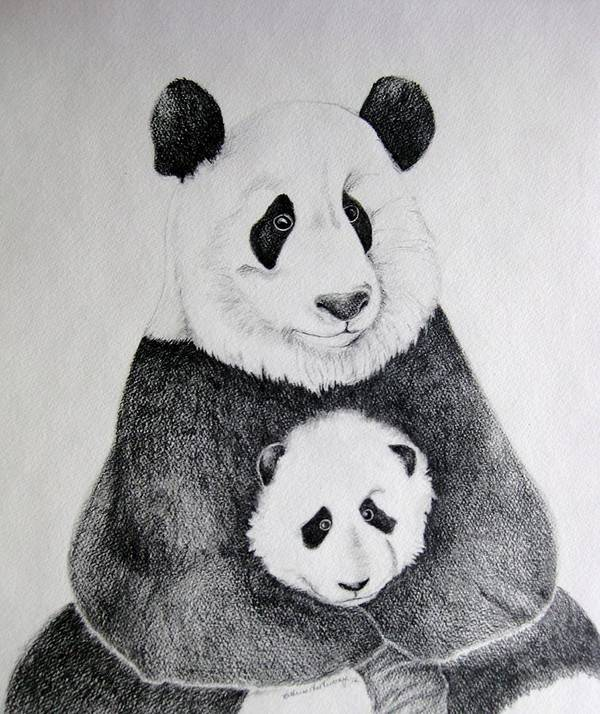 Pandas Poster featuring the drawing Terris Pandas by Kathrine McMurray