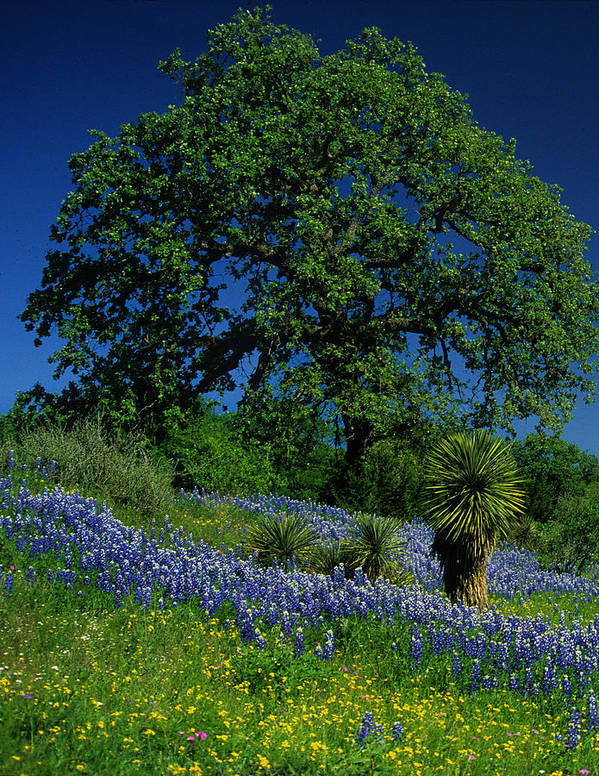 Texas Hill Country Poster featuring the photograph Texas Hill Country by Stan Williams