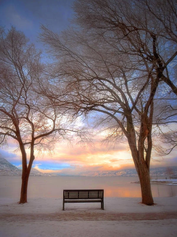 Trees Poster featuring the photograph The Bench In The Winter by Tara Turner