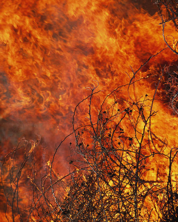 North America Poster featuring the photograph The Flames Of A Controlled Fire by Joel Sartore
