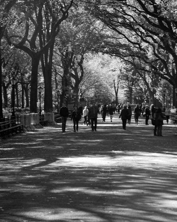 Black And White Poster featuring the photograph The Mall At Central Park by Rob Hans