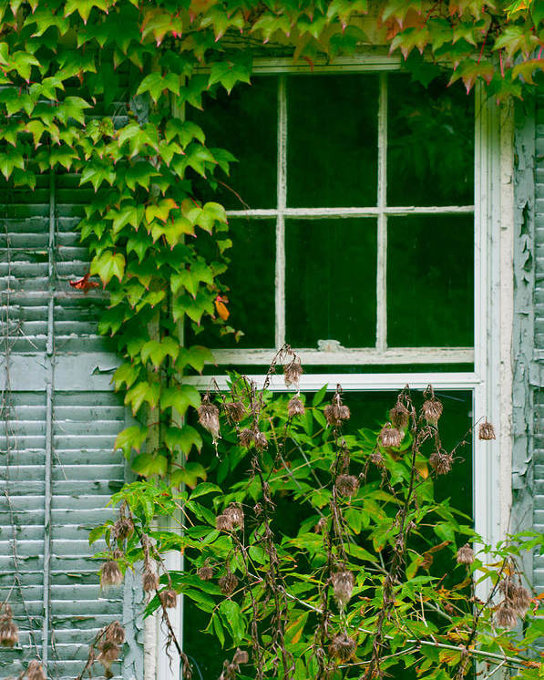 Niagara On The Lake Window Poster featuring the photograph The Other Window by Lisa DiFruscio