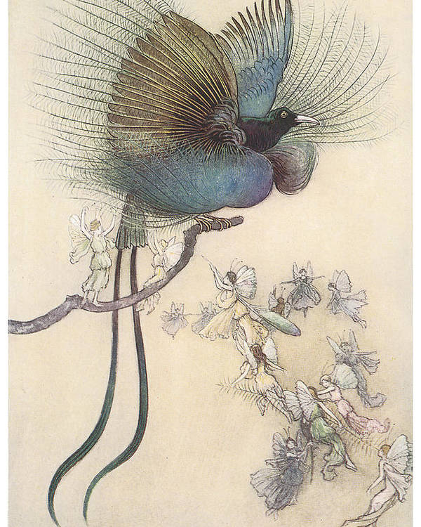 Warwick Goble Poster featuring the painting The Water Babies The Most Beuatiful Bird Of Paradise by Warwick Goble