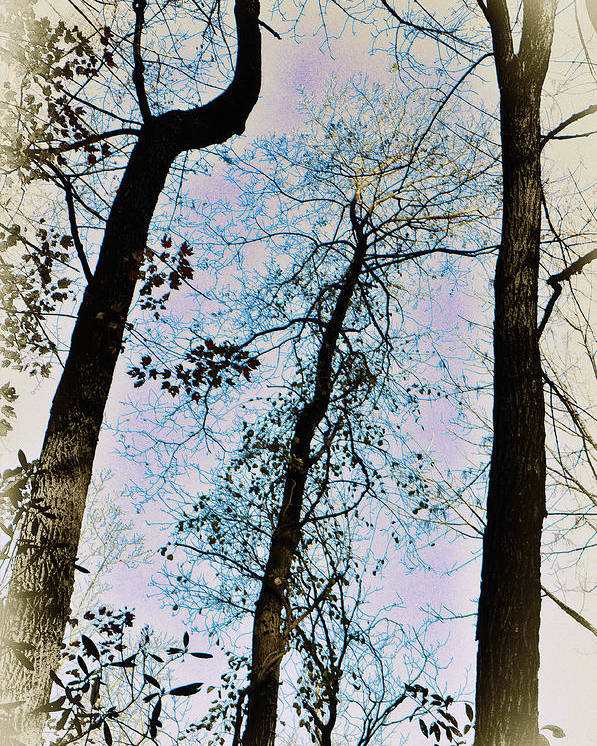 Trees Poster featuring the photograph Things Are Looking Up by Bill Cannon