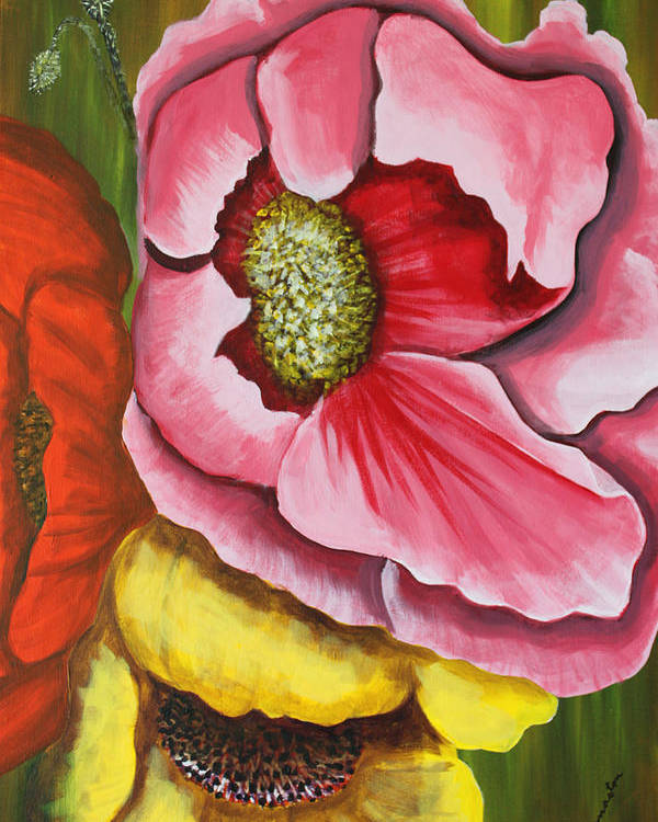 Floral Framed Prints Poster featuring the painting Three Strange Poppys by Robert Thomaston