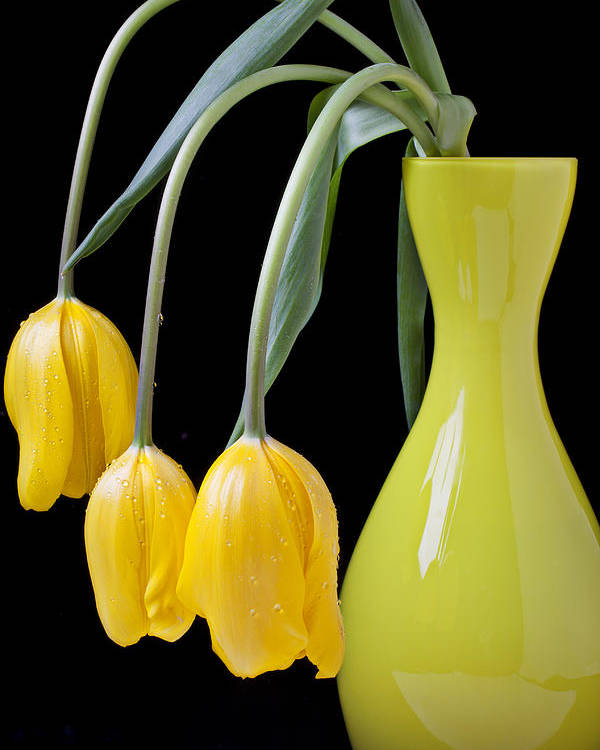 Three Yellow Poster featuring the photograph Three Yellow Tulips by Garry Gay