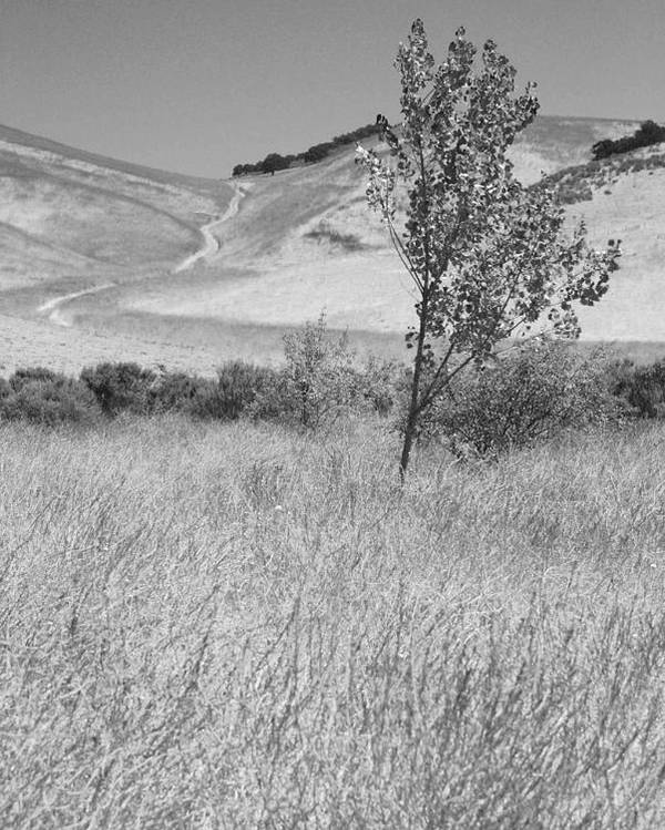 Los Alamos Poster featuring the photograph Through The Tall Grasses by Kathleen Grace