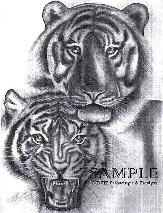 Portraits Poster featuring the drawing Tigers by Rick Hill