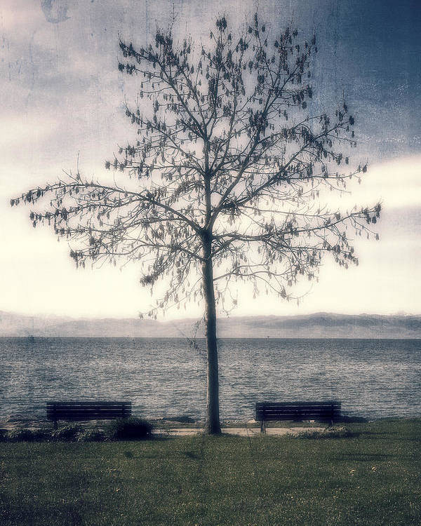 Lake Poster featuring the photograph tree at lake Constance by Joana Kruse