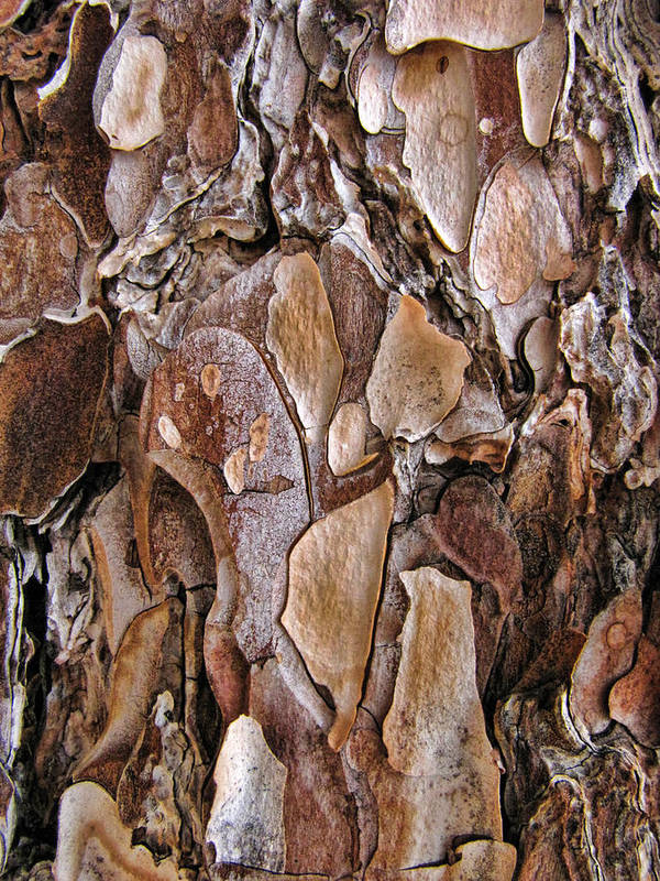 Palmsprings Poster featuring the photograph Tree Bark Close Up by Helaine Cummins