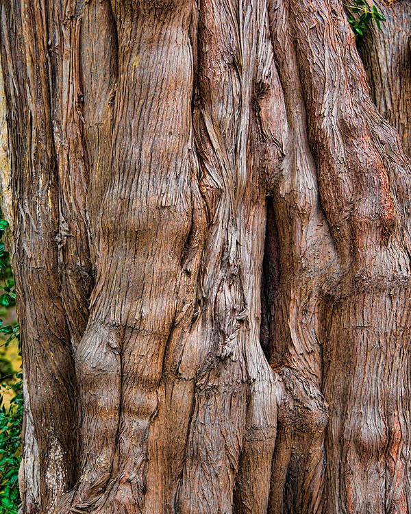 Trees Poster featuring the photograph Tree Butts by David Theroff