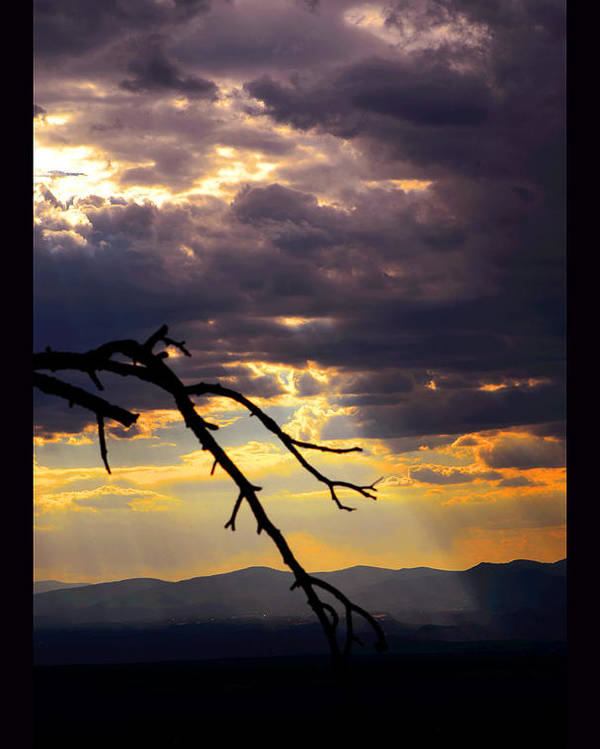 Santa Fe Poster featuring the photograph Tree Limb In Sunset by Susanne Still