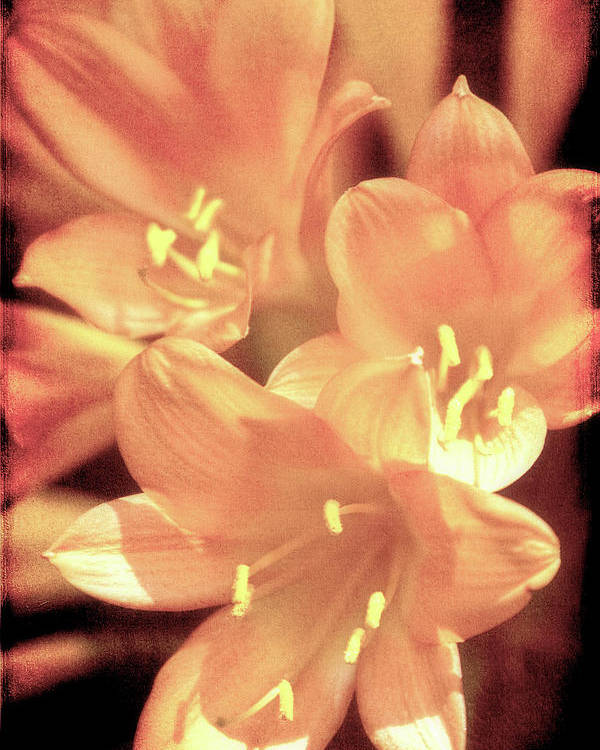 Flower Poster featuring the photograph Tropical Glow by Chris Lord