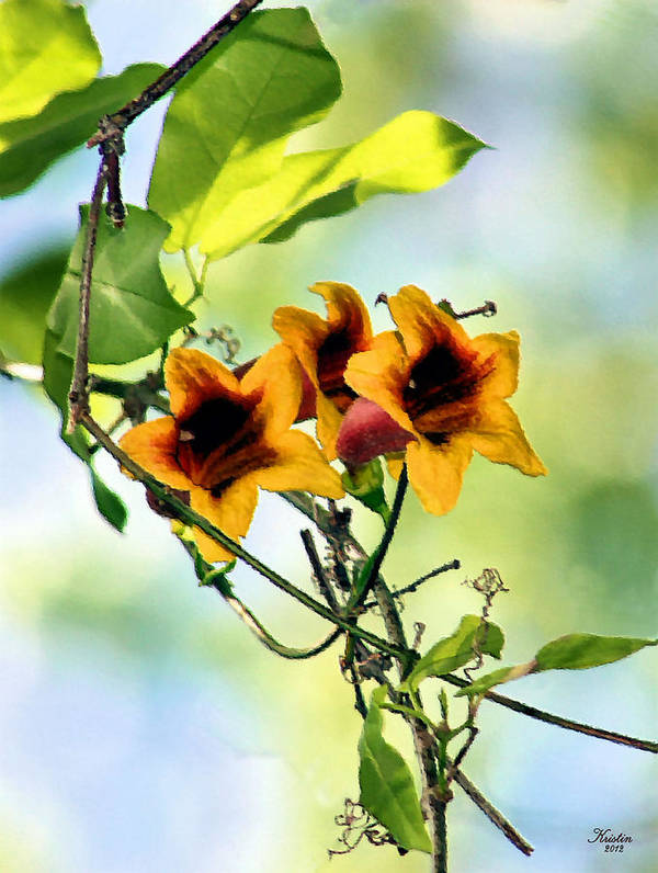 Trumpet Vine Poster featuring the photograph Trumpeting Spring by Kristin Elmquist