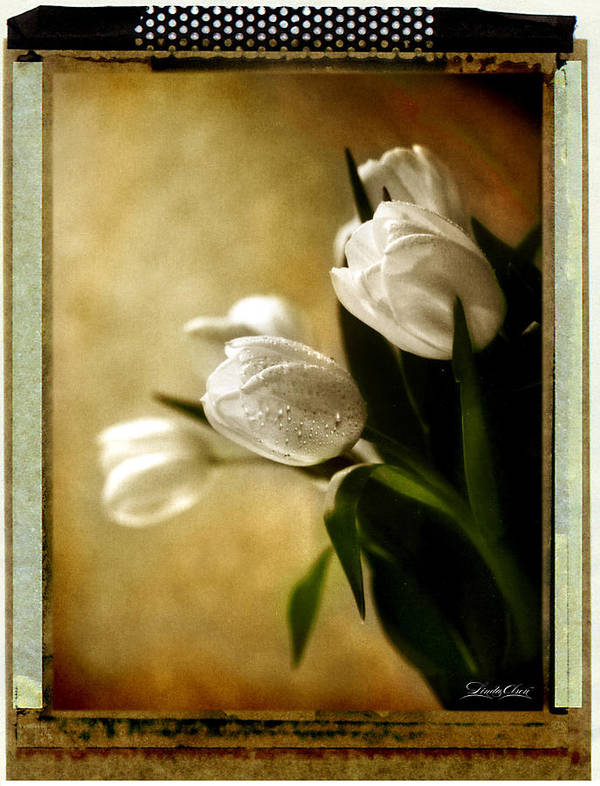 Tulips Poster featuring the photograph Tulips Side Sepia by Linda Olsen