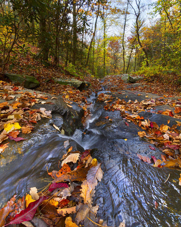 Appalachia Poster featuring the photograph Tumbling Leaves by Debra and Dave Vanderlaan